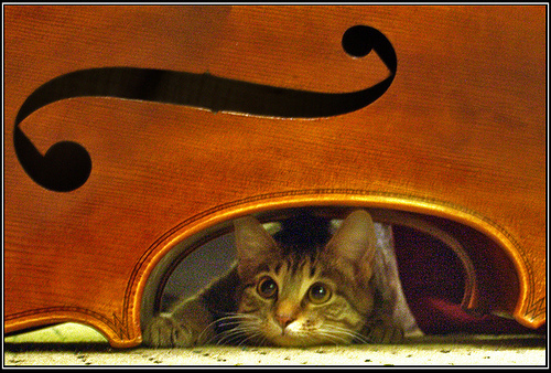 jazzcat 2.jpg